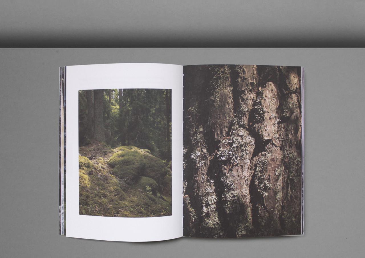 Ur_skogen-6